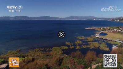 视频   【乡村游】舌尖上的抚仙湖
