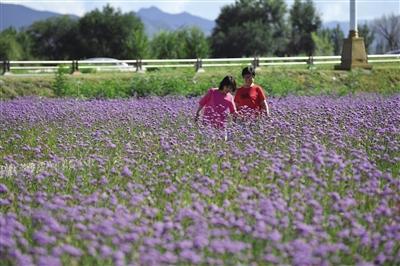 今天的敕勒川草原 你想找寻的梦中草原