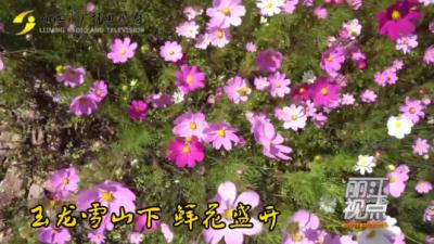 黄金周玩场:丽江玉龙雪山下 鲜花盛开