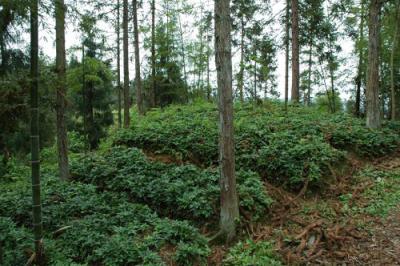 古蔺县实施退耕还林工程发挥良好生态效益让山更美民更富