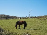 图集 | 来舍得草场,看风车数牛羊