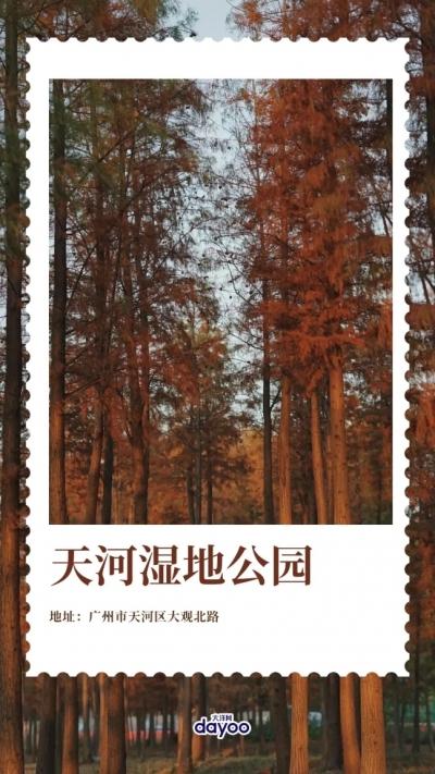 新活广州 | 拎上餐篮带上鲜花,到这些地方体验秋日油画般的野餐吧!