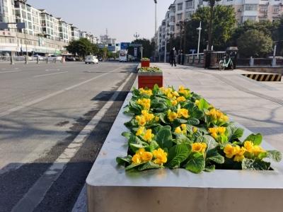 温江区综合行政执法局为城市绿化再添新彩
