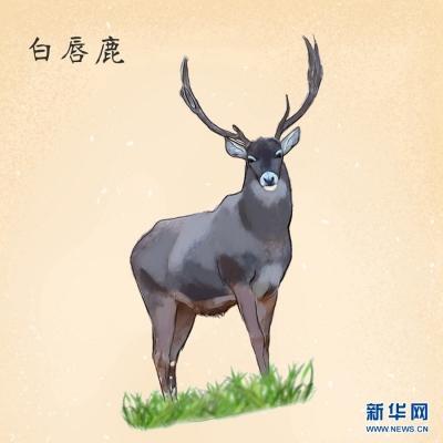 一组手绘,带你走进高原野生动植物世界