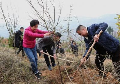 未来十年将造林40万亩 巫山持续改善长江沿岸生态环境