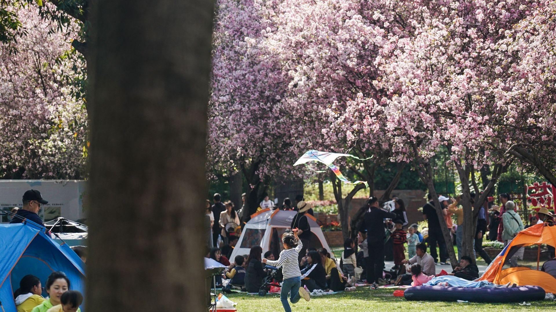 图集 | 西华公园海棠花开正盛