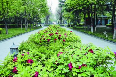 西安高新区:游园赏春,风景这边独好