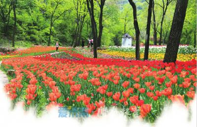 最美人间四月天!看济南人如何花式过春天