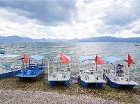图集   澄江樱花谷 感受海岛风情