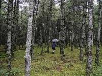 图集   大哨森林 山野秘境