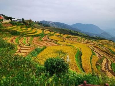 中秋国庆游玉溪丨又是一季谷子黄,快来元江羊街打卡啦!