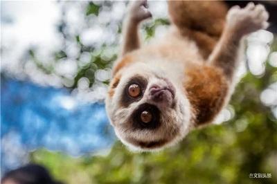 喜迎COP15   跟着森林体验师,探寻普洱国家公园生物多样性之美!