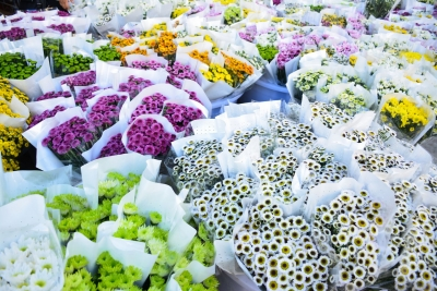 云礼   七彩云南 满足你对鲜花的所有想象