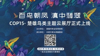 """迎接COP15!楚雄""""百鸟朝凤 滇中翡翠""""鸟类主题云展厅正式上线"""