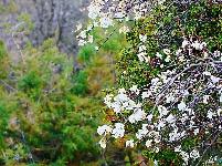 图集|探寻丽江郊外春景