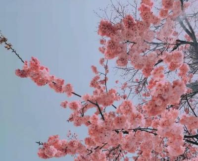 属于春天的仪式感都有,丽江东巴谷太值得去!