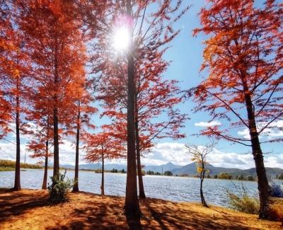 寒露丨欢迎再次踏上赏秋旅程,丽江在等您!