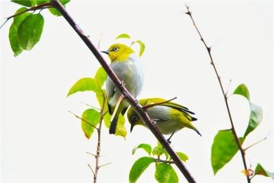 多图 | 春暖花开,楚雄龙川江畔听鸟鸣
