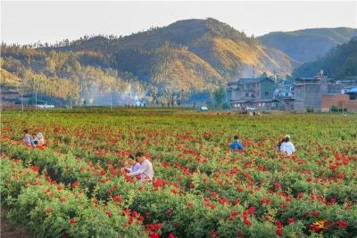 假日旅游持续升温,楚雄州庆小长假接待游客43.65万人次