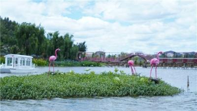 赏花亲水、荷塘野趣……楚雄东华湿地公园许你一个缤纷夏日