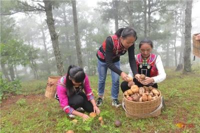 攻略 | 菌香时节到南华,吃菌、采菌、游玩轻松搞定!