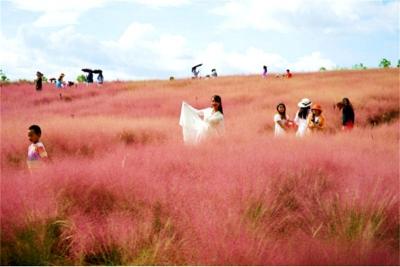 散文   那一片草粉景如黛
